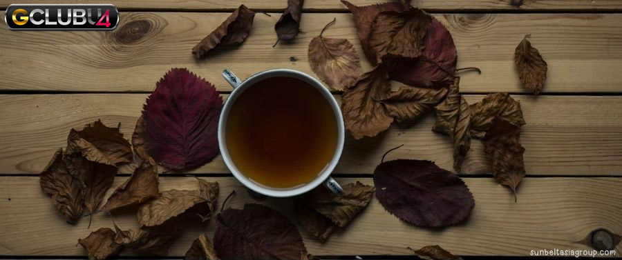 ชาอู่หลง มีประโยชน์ผลข้างเคียงและวิธีใช้อย่างไร